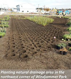 Planting natural drainage area in the northwest corder of Windjammer Park
